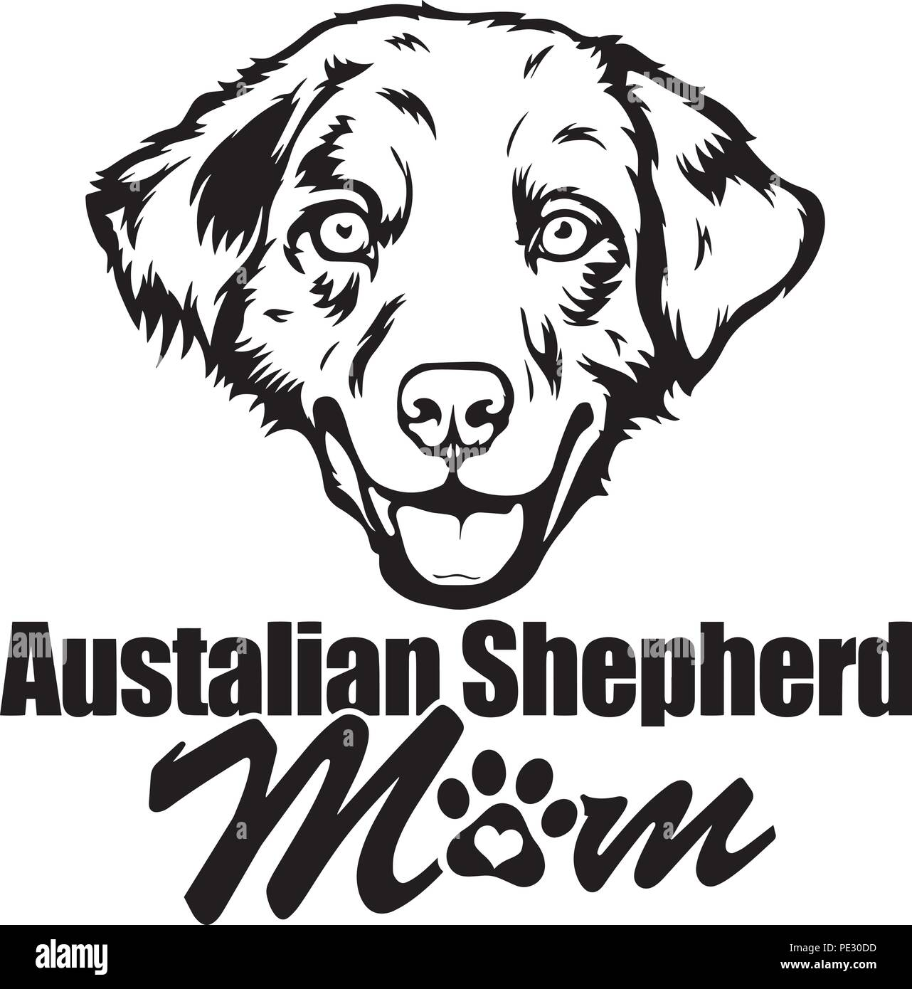 Australian Shepherd Dog Breed Pet Puppy Isolated Head Face Stock