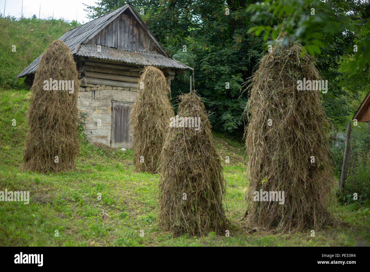 A haystack in the courtyard of a rural house. Traditional farming. Stock for livestock. Carpathians Ukraine - Stock Image