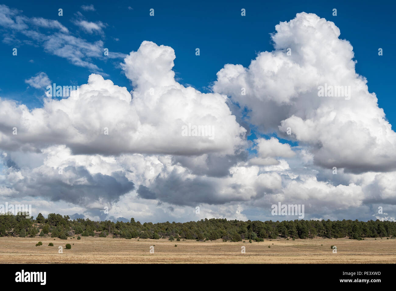 Cumulonimbus clouds. Mora County, NM, USA, by Dominique Braud/Dembinsky Photo Assoc - Stock Image