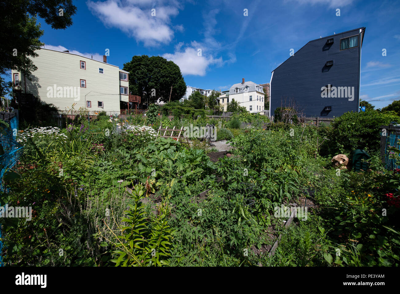 Community gardens in a redeveloped section of East Boston ...