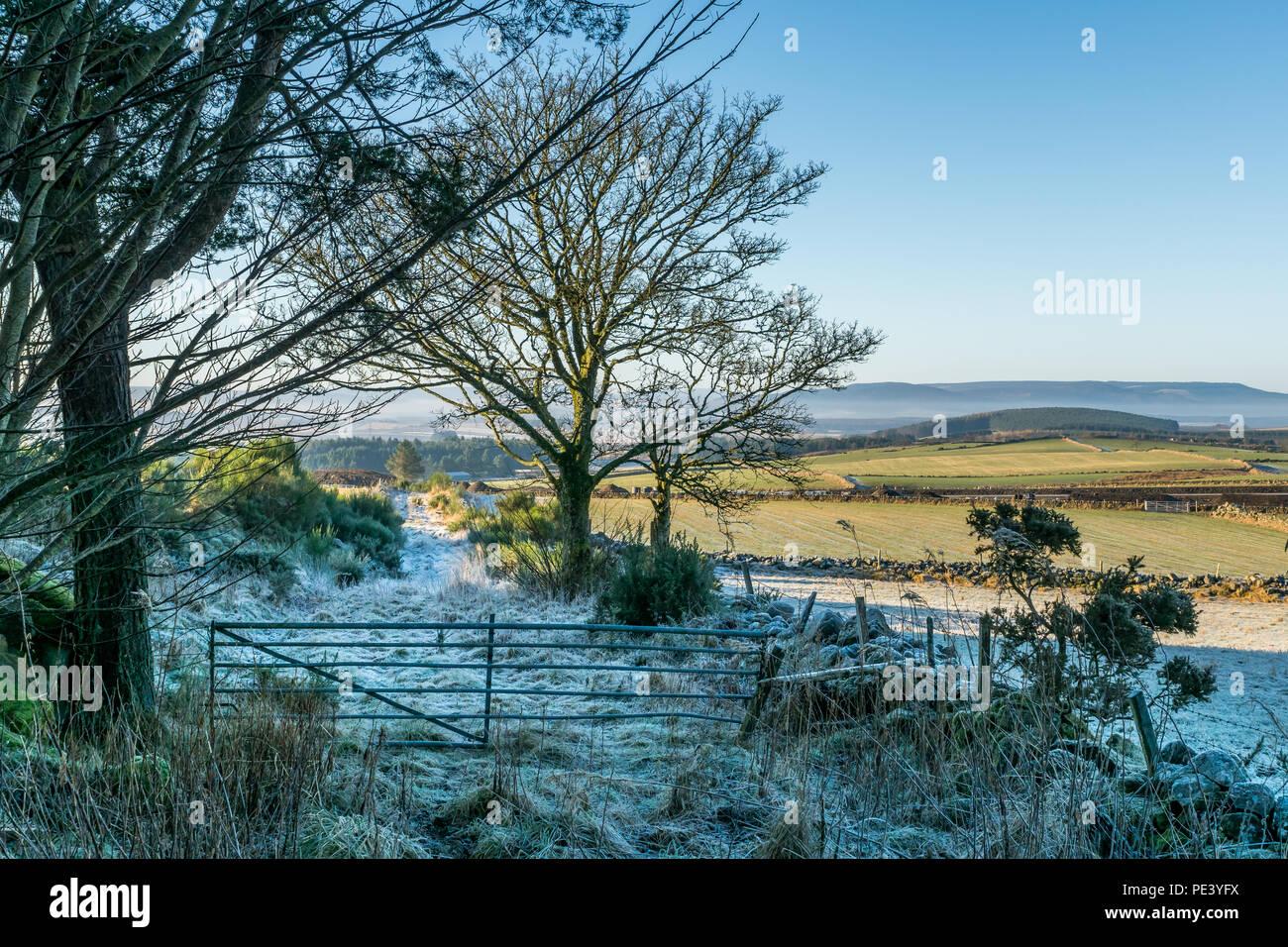 Frosty fields and farm gate, Deeside, Aberdeenshire. - Stock Image