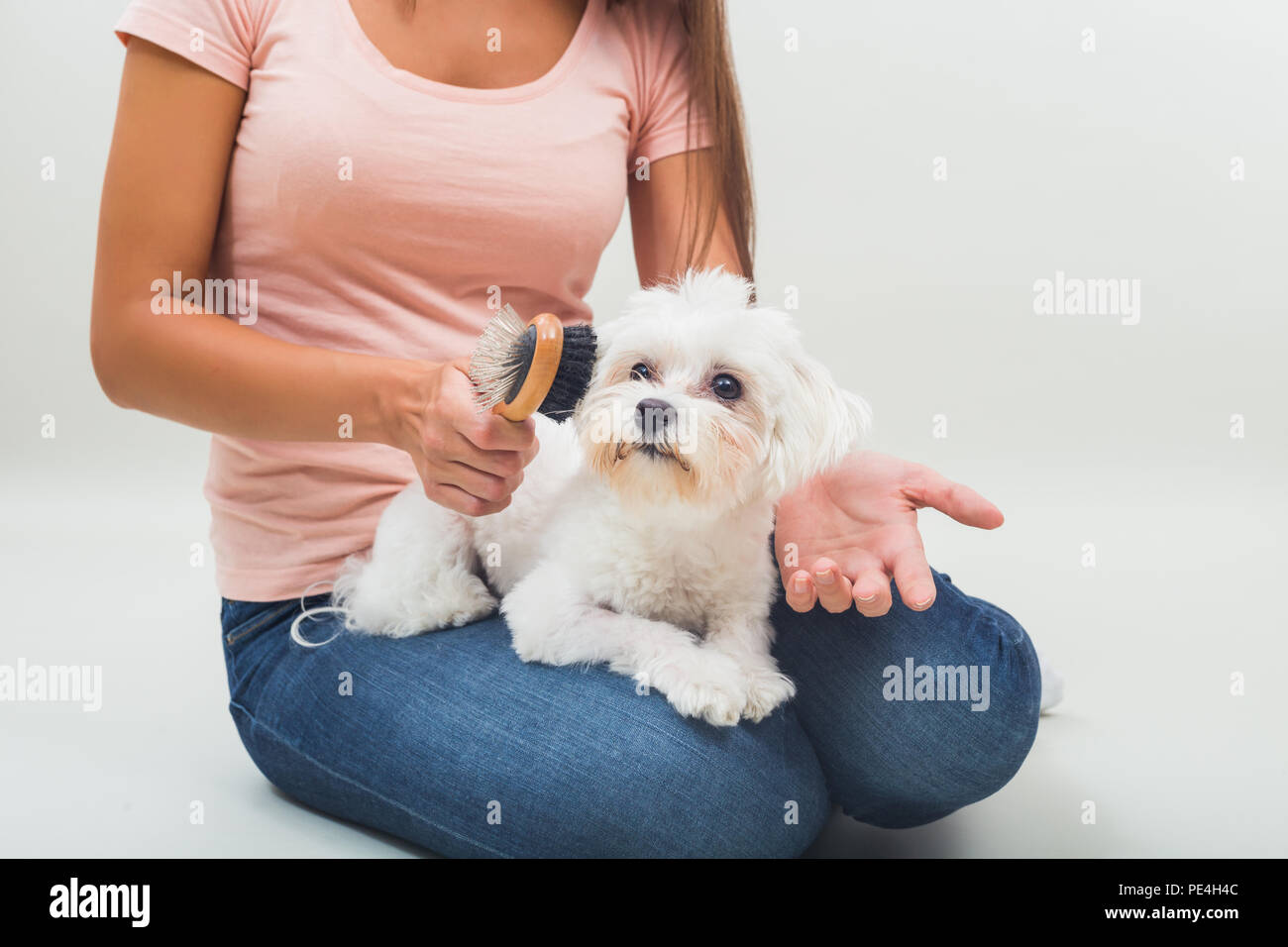 Happy female maltese dog is combing beautiful young woman. - Stock Image