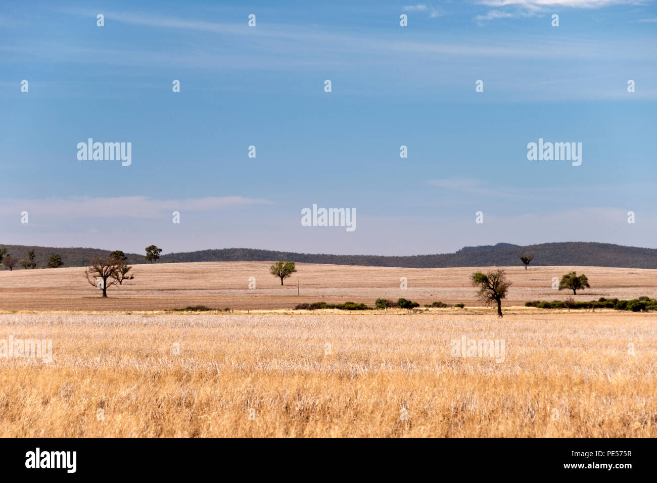 Savanna grasslands along the Mid-Western Highway, near Rankins Springs, a town in the Riverina region of New South Wales, Australia. - Stock Image