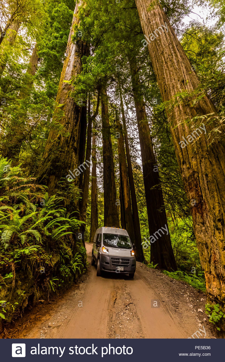 On a road trip in a camper van, driving on Howland Hills Road in Jedediah Smith Redwoods State Park, part of Redwood National and State Parks, near Cr - Stock Image