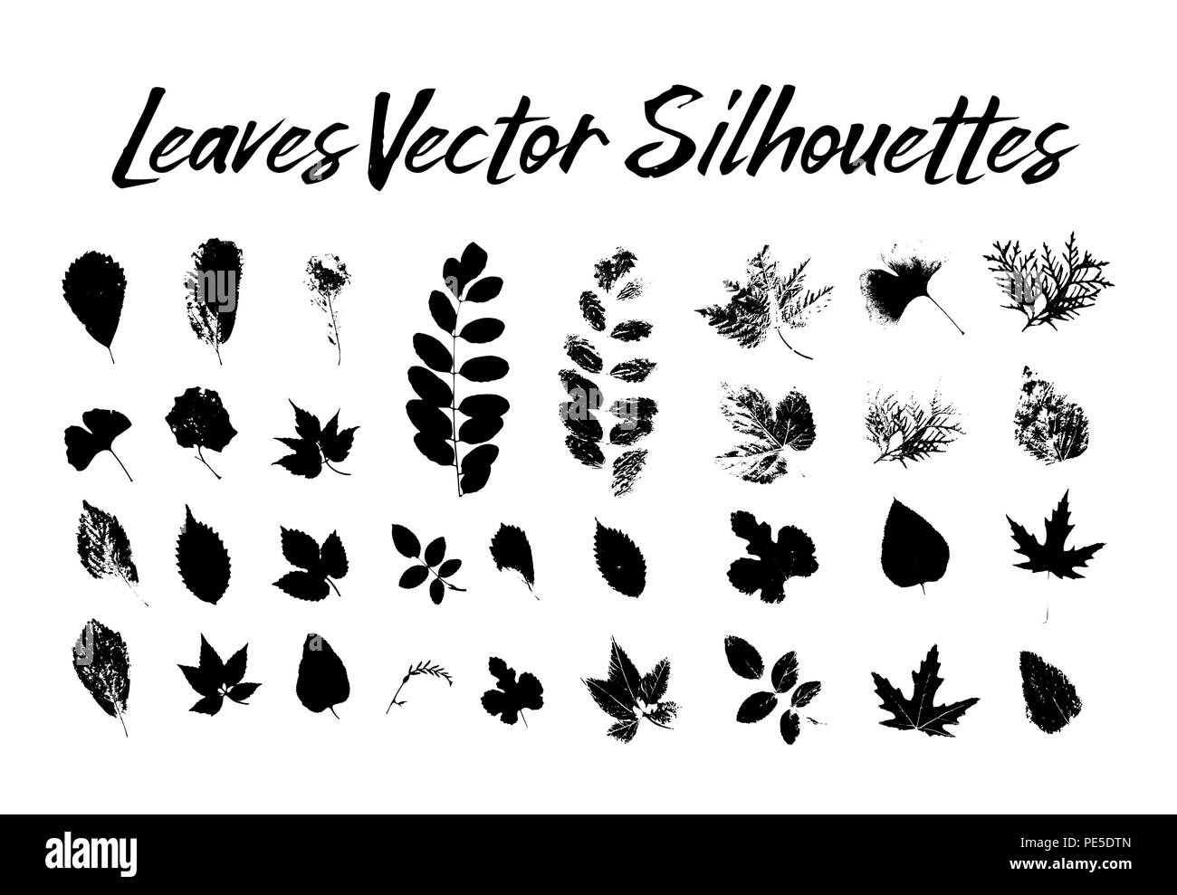 Black silhouette with leaf of rowan or sorb, ginkgo and maple, hop and thuja, aspen and birch, hornbeam and blackberry, poplar. Prints of leaves on twig or stem, branch. Flora and nature theme - Stock Vector