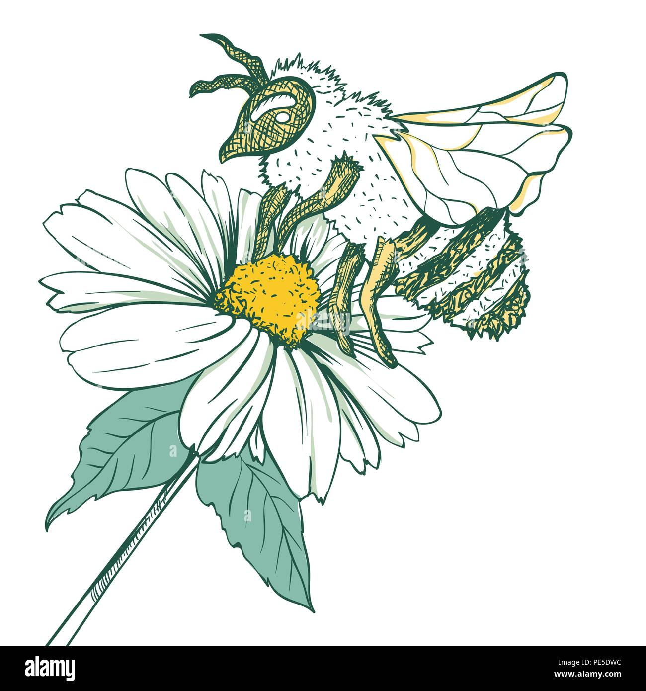 Entomology Sketch Illustration with Bee or Wasp and Camomile Flower. Blossoming and Pollination. Botanical or Medical Theme. Isolated on White Background Stock Vector