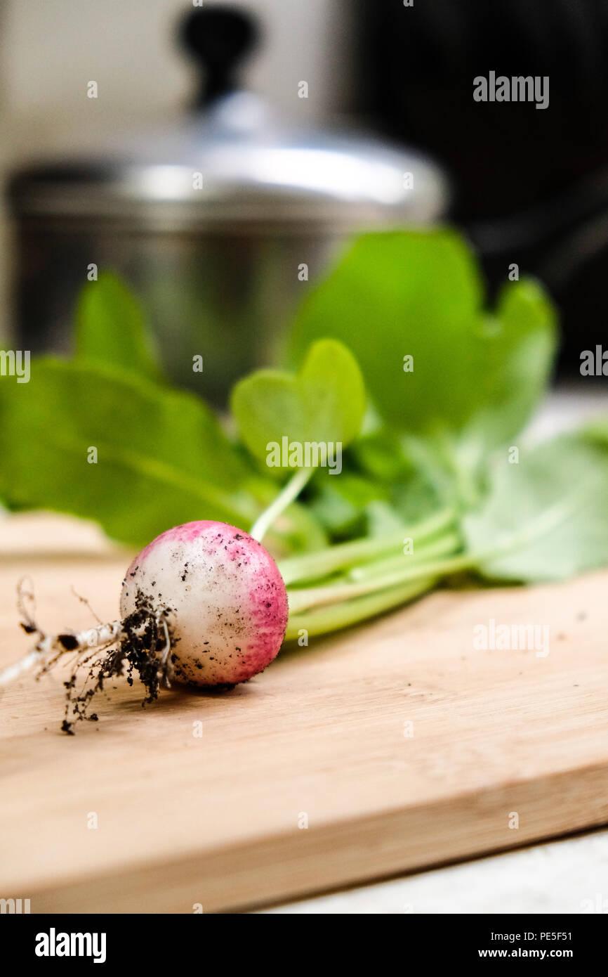Fresh radishes from home vegetable garden - Stock Image