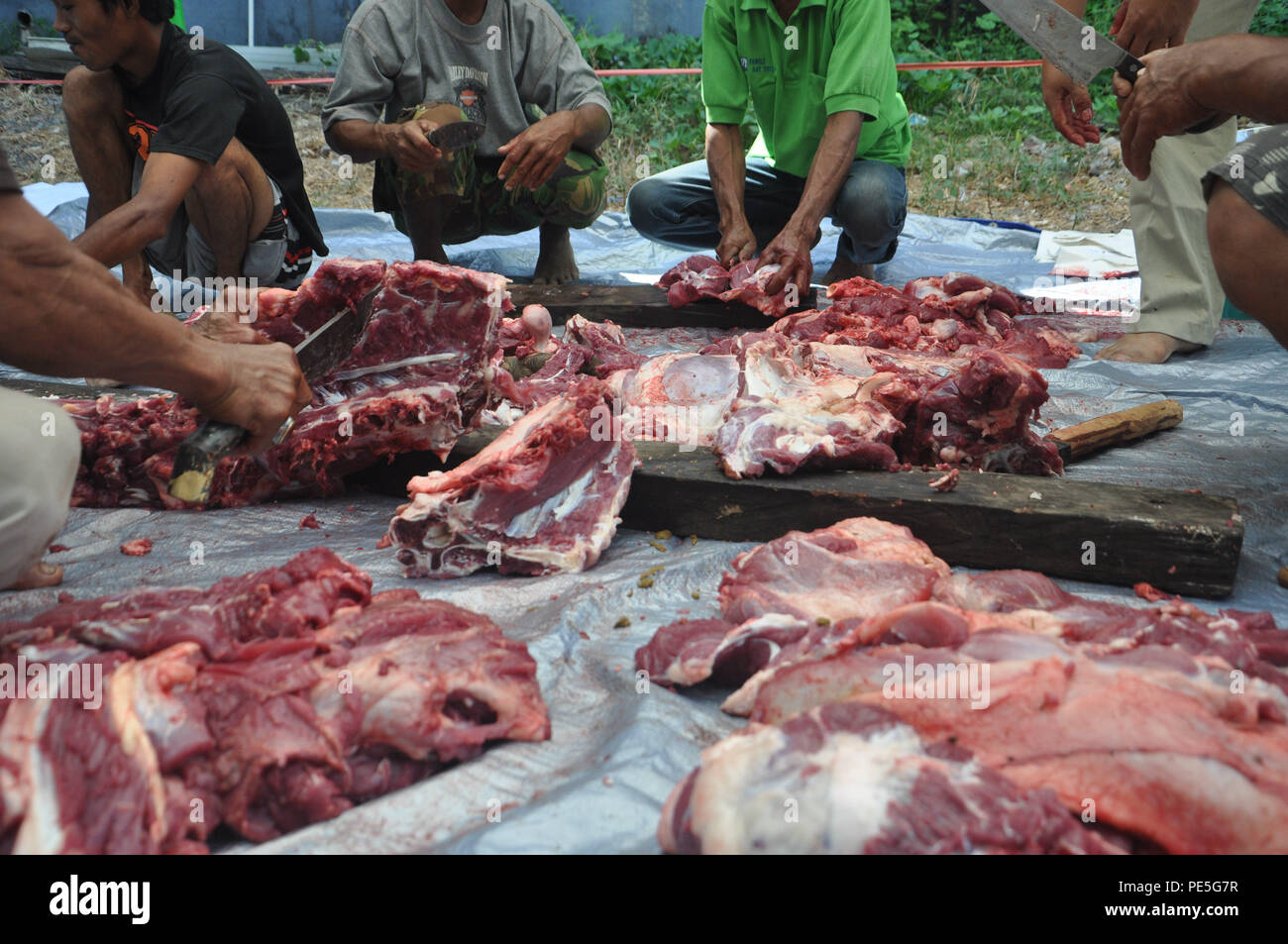 Indonesian moslems cuts the meat of sacrificial cows in Eid al-Adha on September 24, 2015. - Stock Image