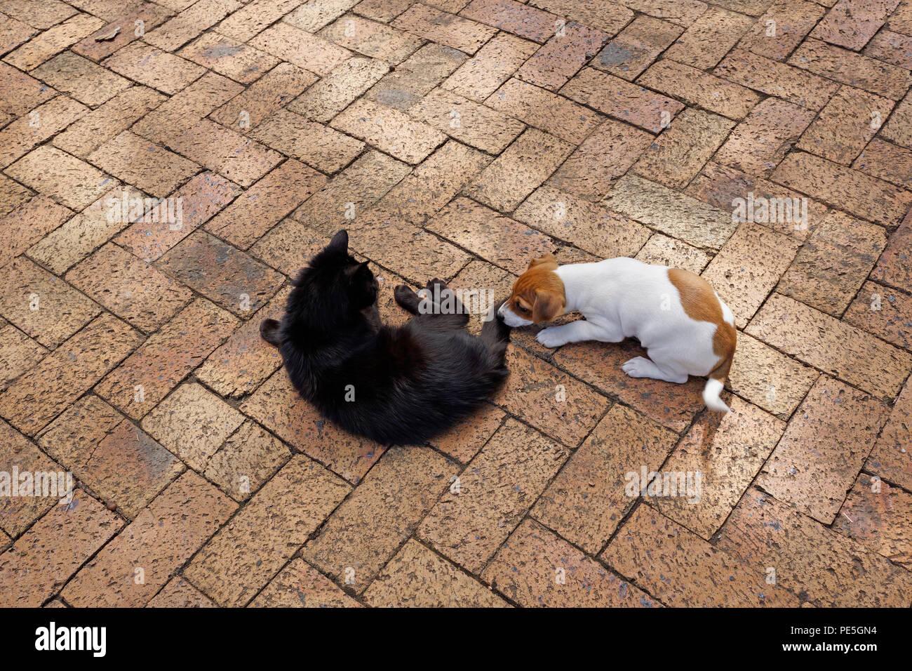 Puppy teasing older cat in garden at Delheim wine estate, Stellenbosch, South Africa. - Stock Image