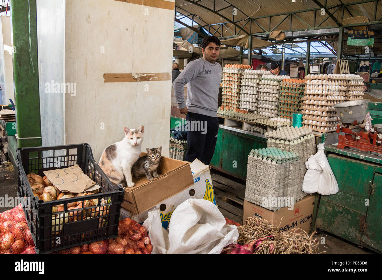 SKOPJE, MACEDONIA - OCTOBER 24, 2015: Egg seller looking at a stray cat and her kitten in the center of the Skopje Bazaar Green market, a landmark of  - Stock Image