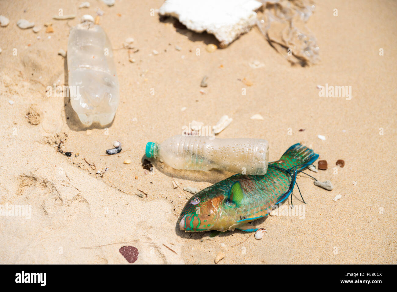 Plastic causes death of millions of marine animals throughout the planet. - Stock Image