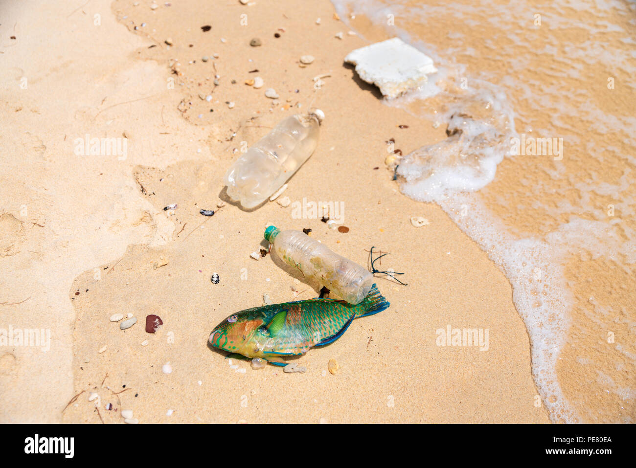 Plastic causes death of millions of marine animals throughout the planet. Save planet and marine life concept. - Stock Image