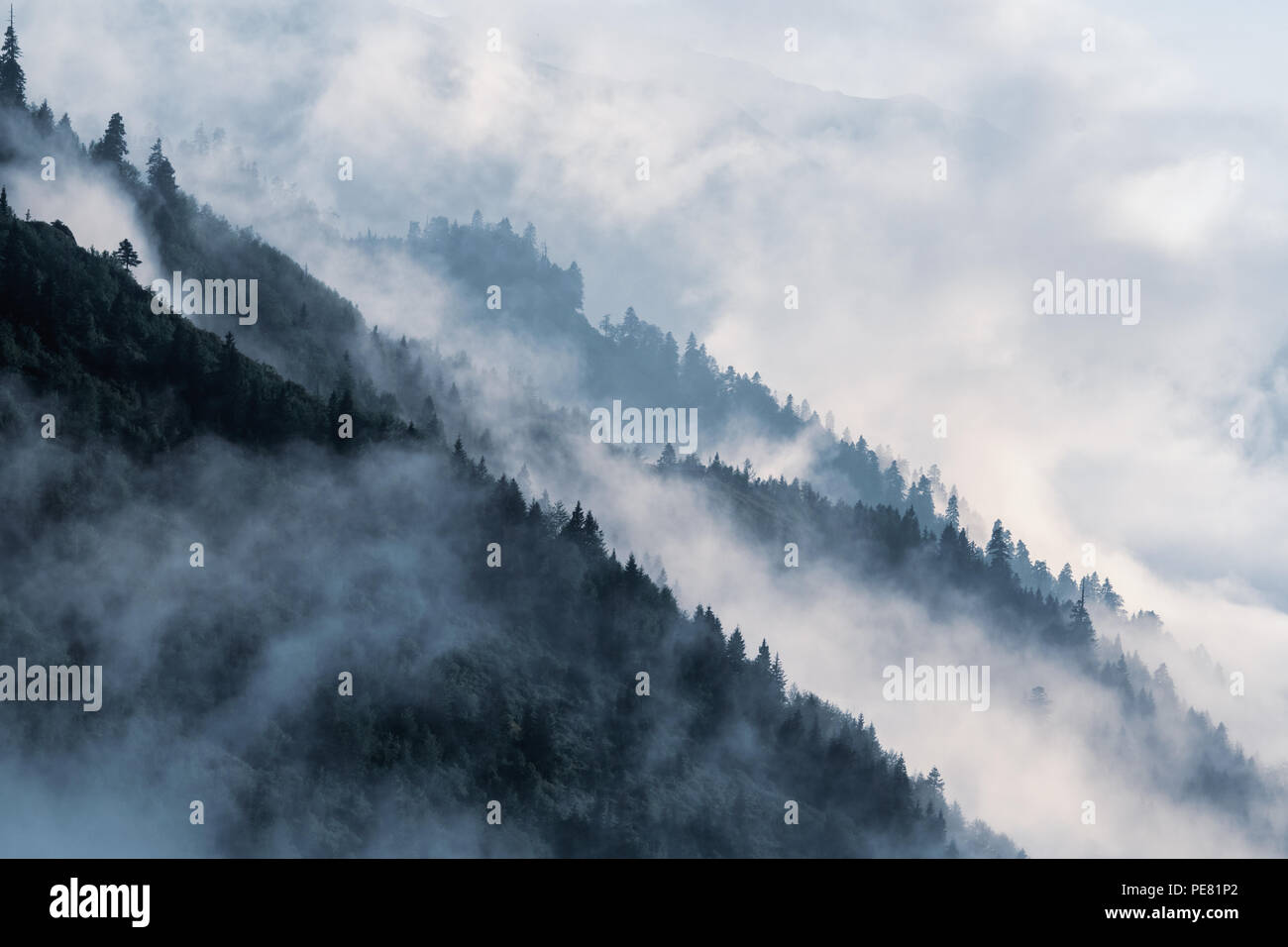 Forested mountain slope in low lying valley fog with silhouettes of evergreen conifers shrouded in mist. Scenic cloudy landscape in Kackar Mountains - Stock Image