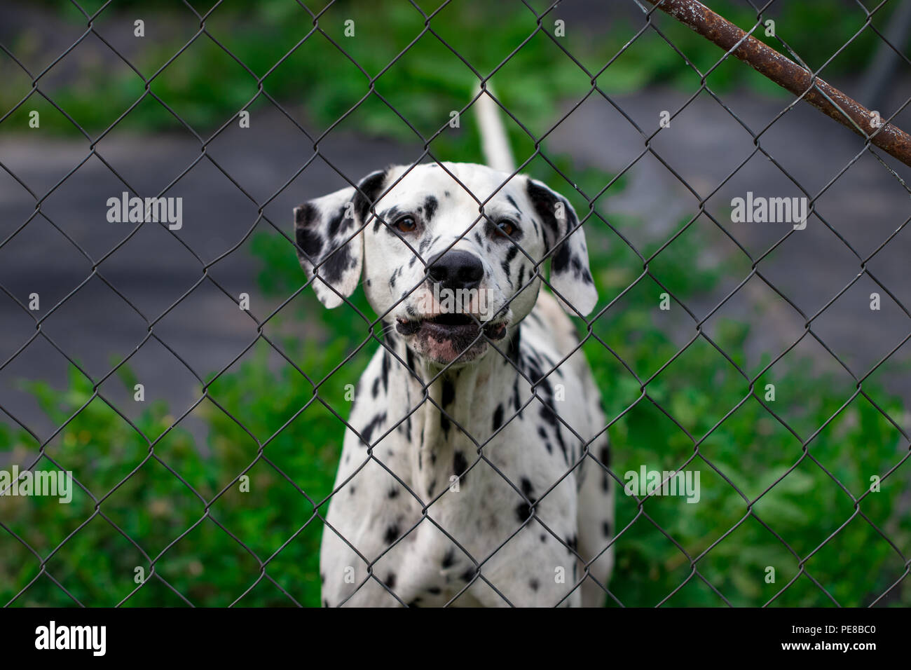 dog behind the fence in the cage looks at will, the protection of animals. Stock Photo