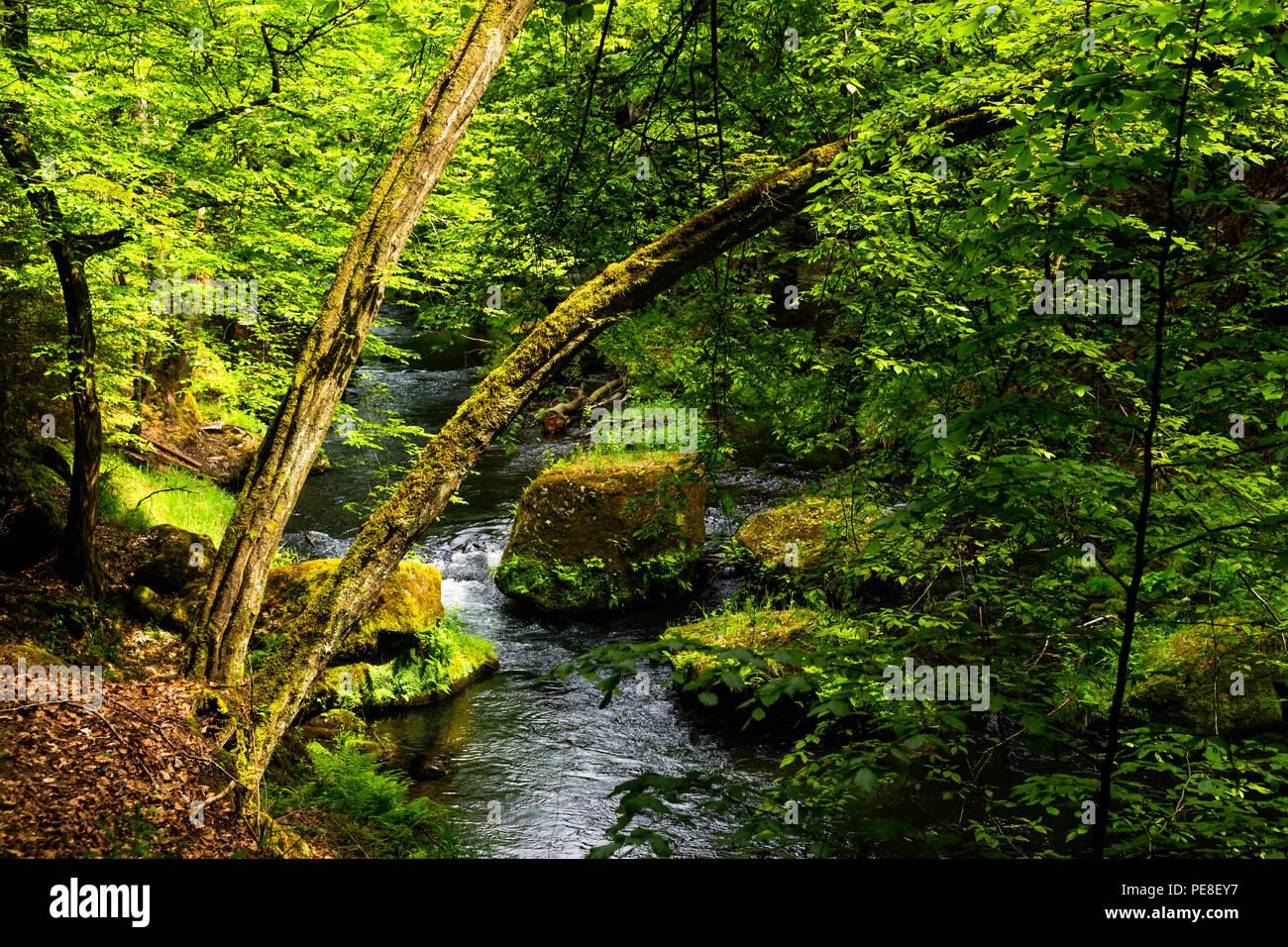 Wandern in der boehmischen Schweiz - Stock Image