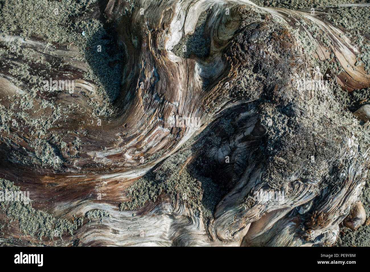 A macro shot of a warped driftwood log with sand on top. - Stock Image