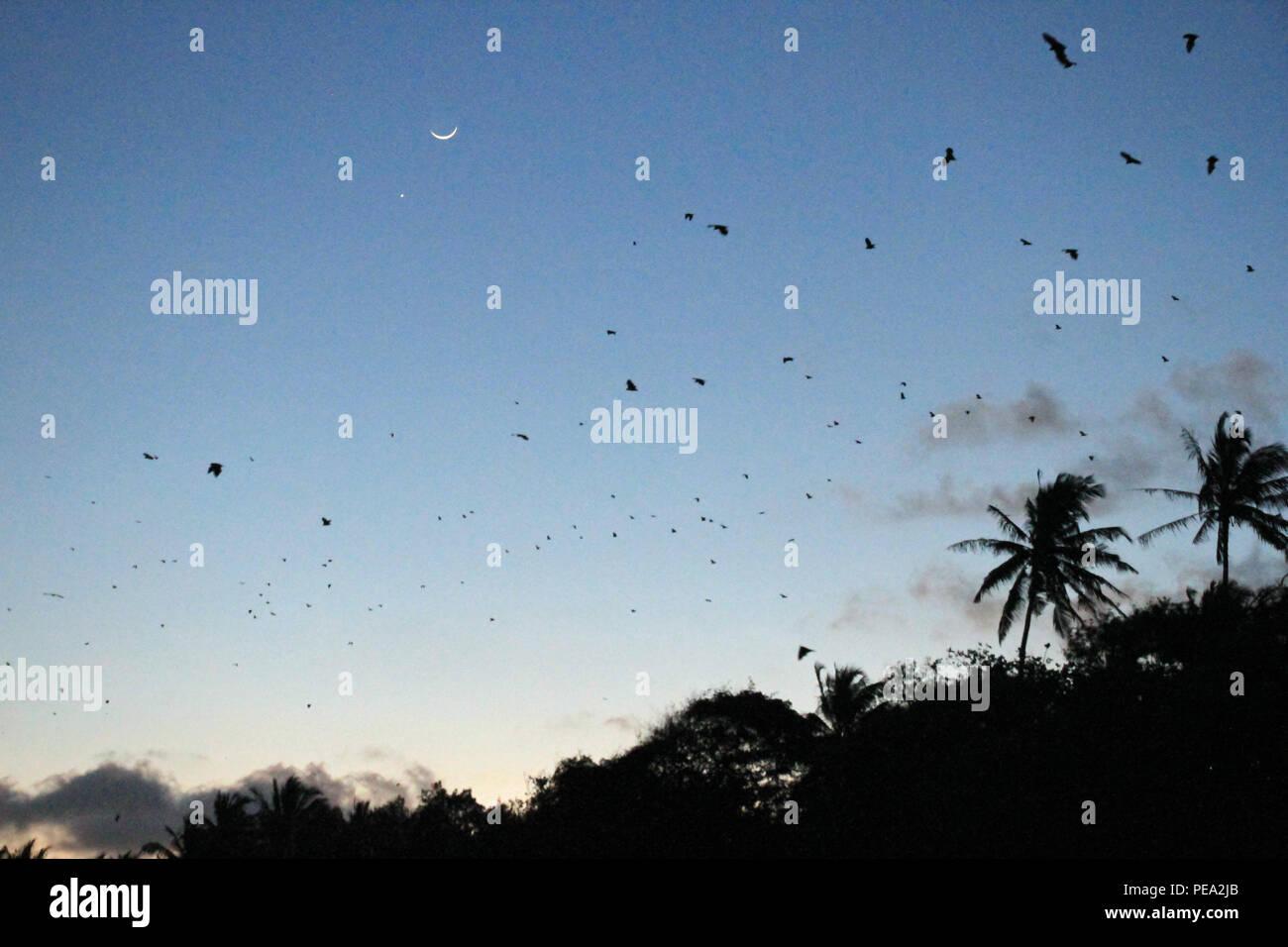Bats flying on Mafia Island - Stock Image