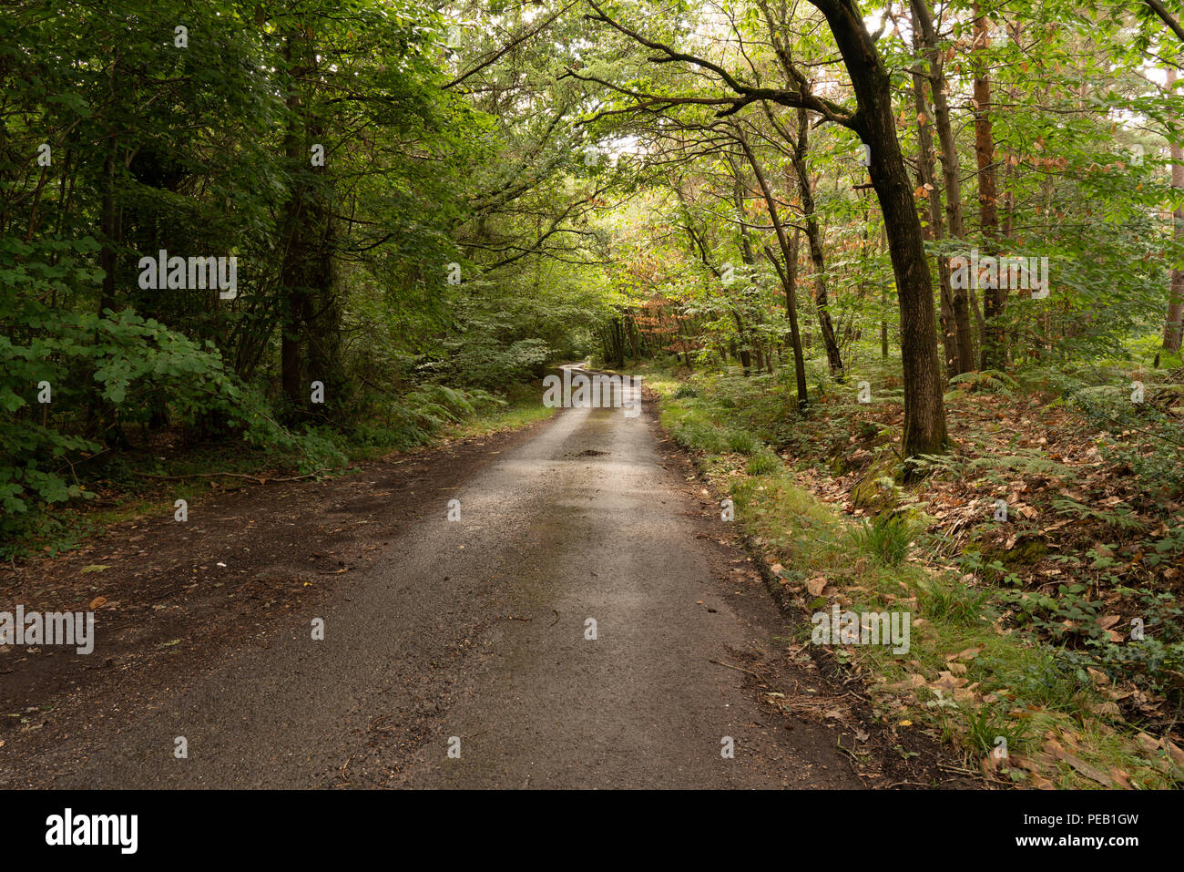 Binsted Lane, Arundel, West Sussex: Option 5A Arundel Bypass - a controversial dual carriageway will cut across ancient pastures and woodland. - Stock Image