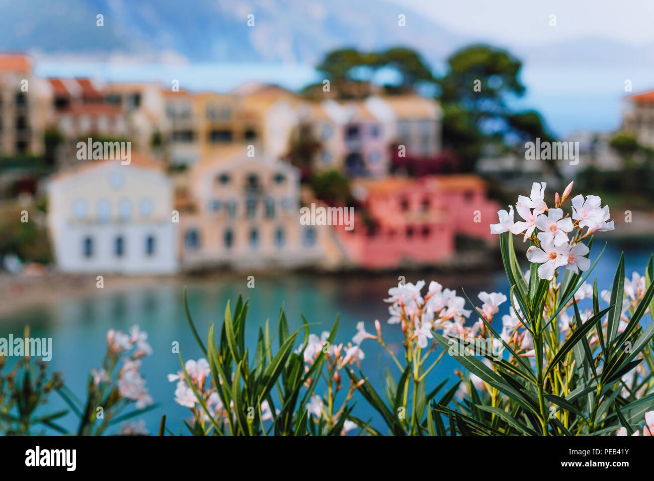 Bright white flower blossom in front of turquoise colored bay in Mediterranean sea and beautiful colorful houses in Assos village in Kefalonia, Greece - Stock Image
