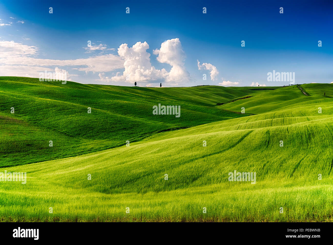 Rolling Hills with Cypress treess and Wheat Fileds, San Quircio D'Orcia, Tuscany, Italy - Stock Image