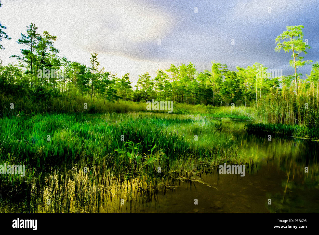 Digital paintings of grasslands during sunset in Florida Everglades - Stock Image
