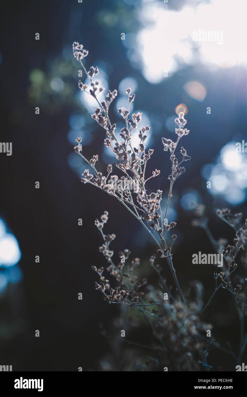 Wild plants and sun - Stock Image