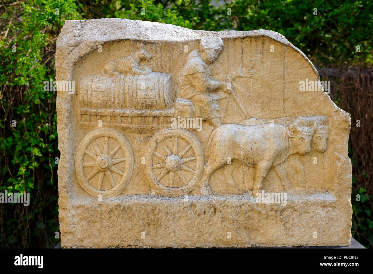 Roman relief of an ox cart, Augsburg, Swabia, Bavaria, Germany - Stock Image