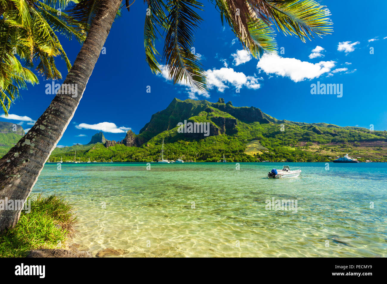 Palm Trees on Shoreline of Ocean at Moorea in Tahiti with mountain view - Stock Image