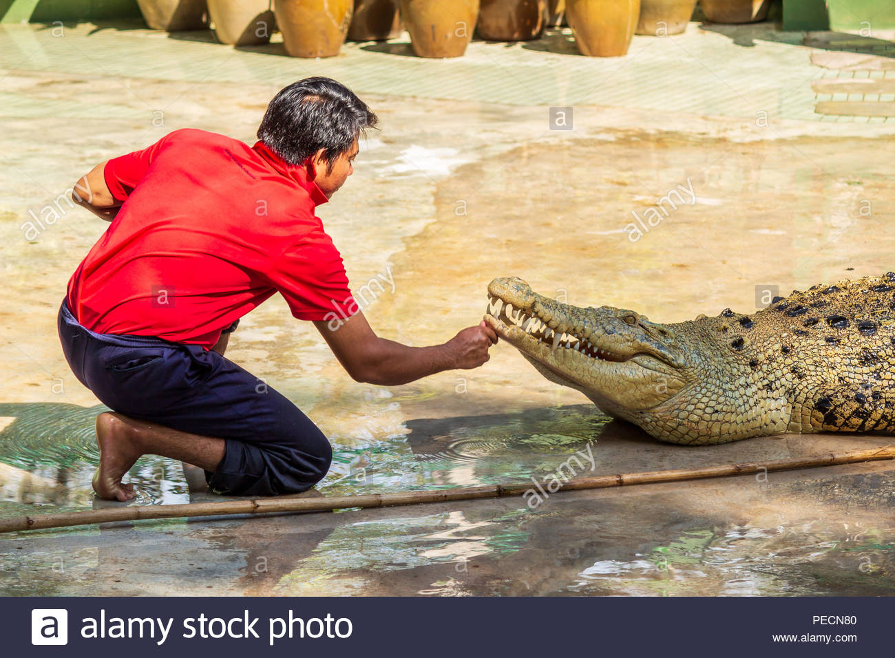 Man doing a Stunt with a Crocodile in the Crocodile Farm in Langkawi, Malaysia. - Stock Image