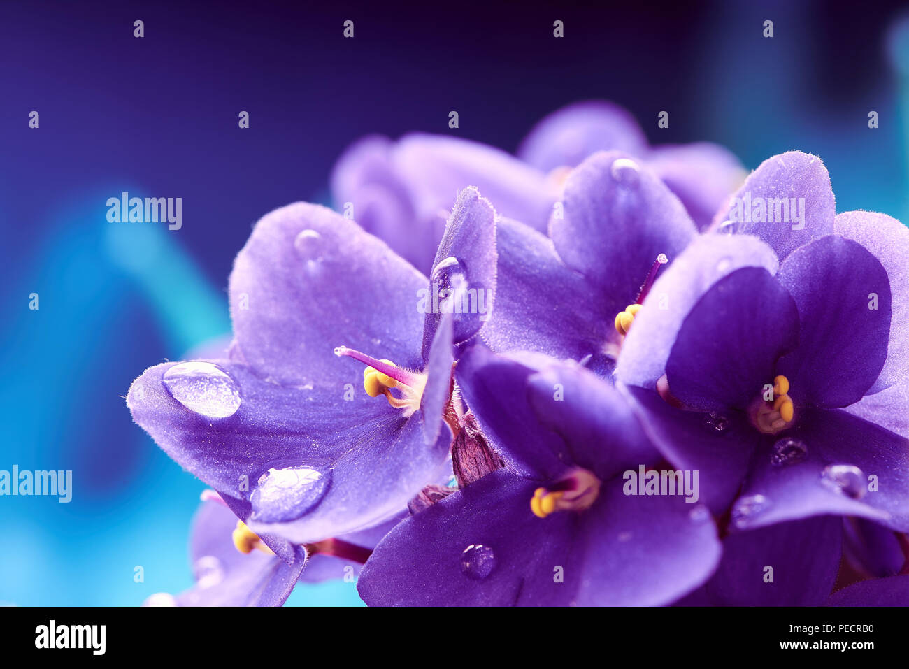 Violet Flower Wallpaper High Resolution Stock Photography And Images Alamy