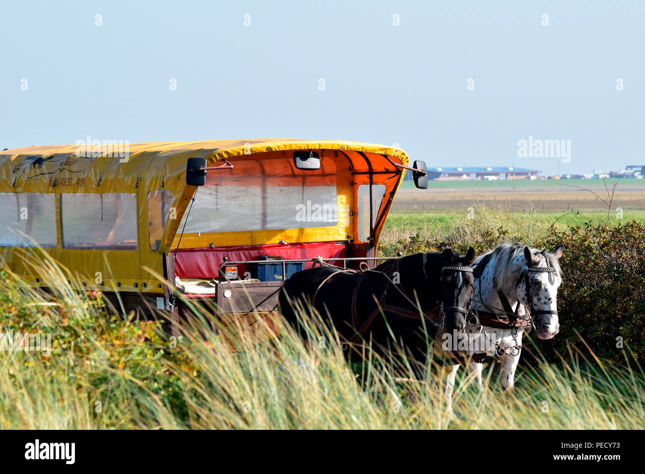 Team of Horses, Juist, National Park Wadden Sea, Lower Saxony, East Frisian Island, Germany Stock Photo