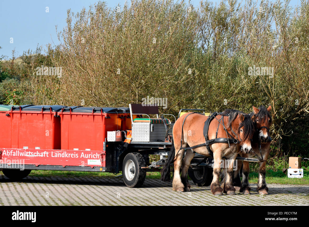 Team of Horses, rubbish collection, Juist, National Park Wadden Sea, Lower Saxony, East Frisian Island, Germany Stock Photo