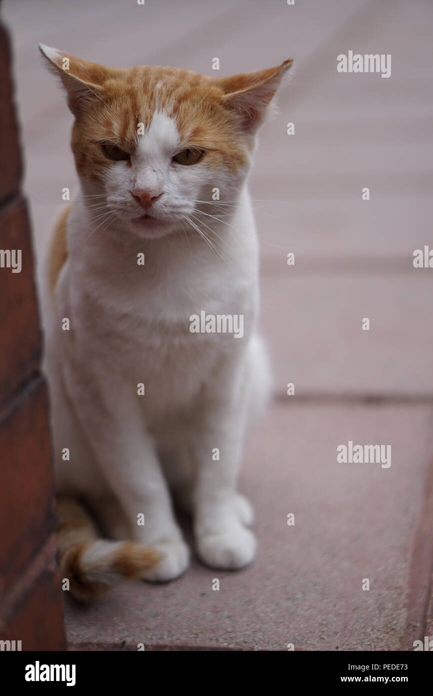 Angry Cat Portrait - Stock Image