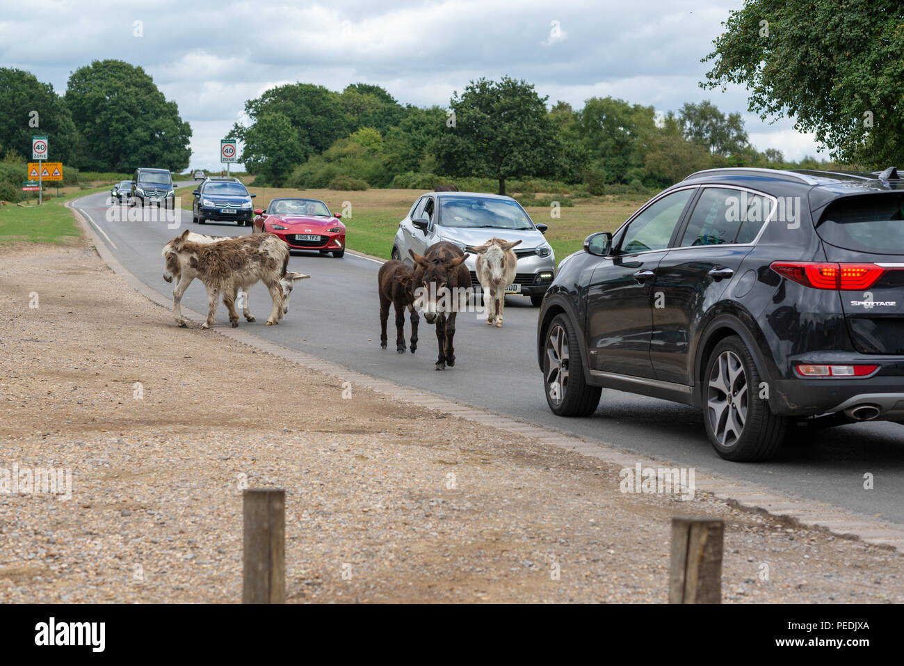 New Cars Uk Stock Photos Amp New Cars Uk Stock Images Page 2 Alamy