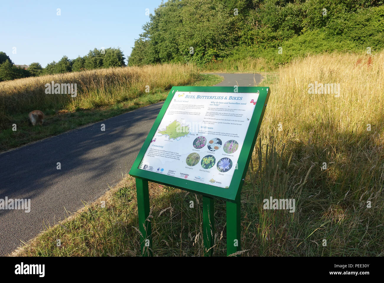 Information Board promoting Biodiversity on the Preston Guild Wheel cycleway - Stock Image