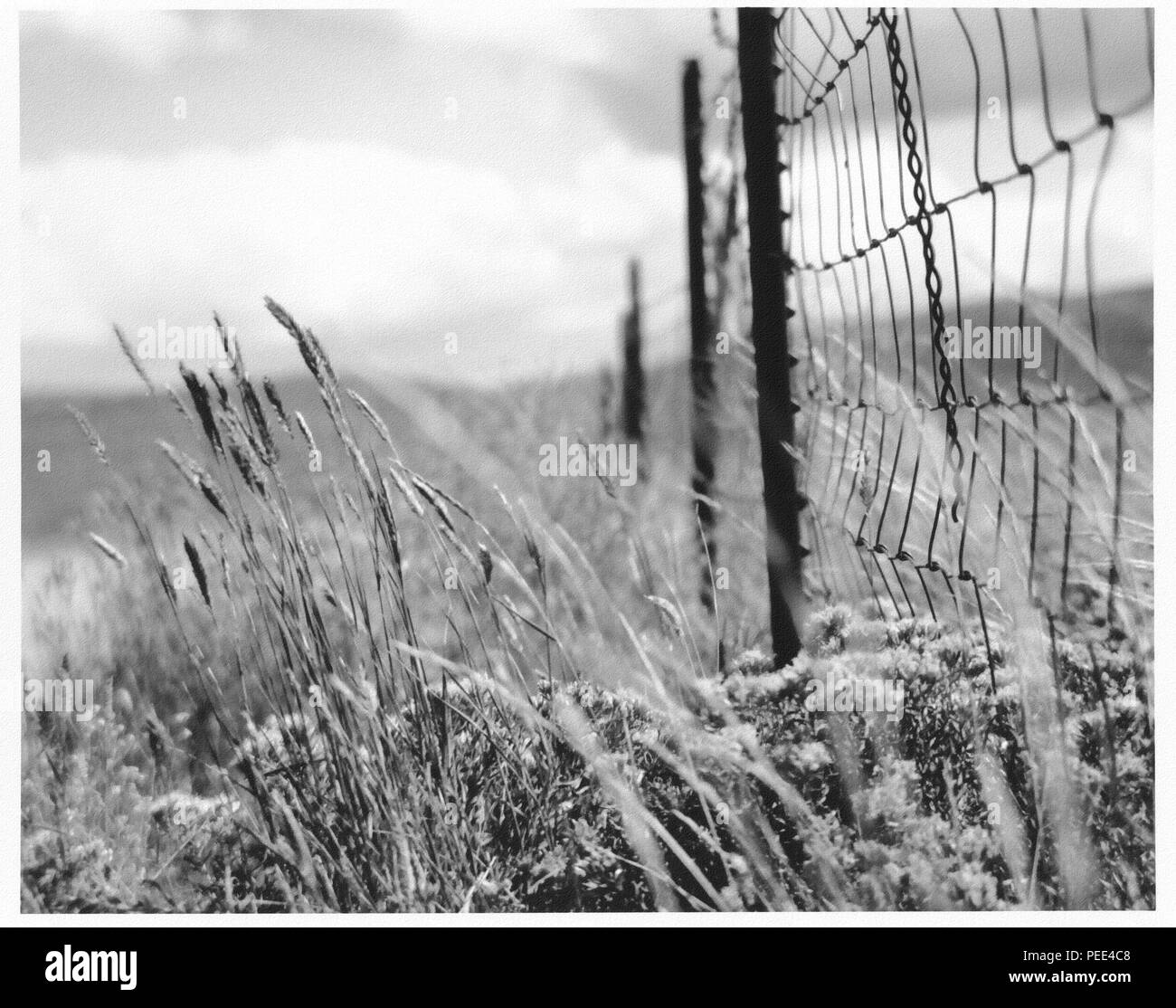 Fence in the field. - Stock Image