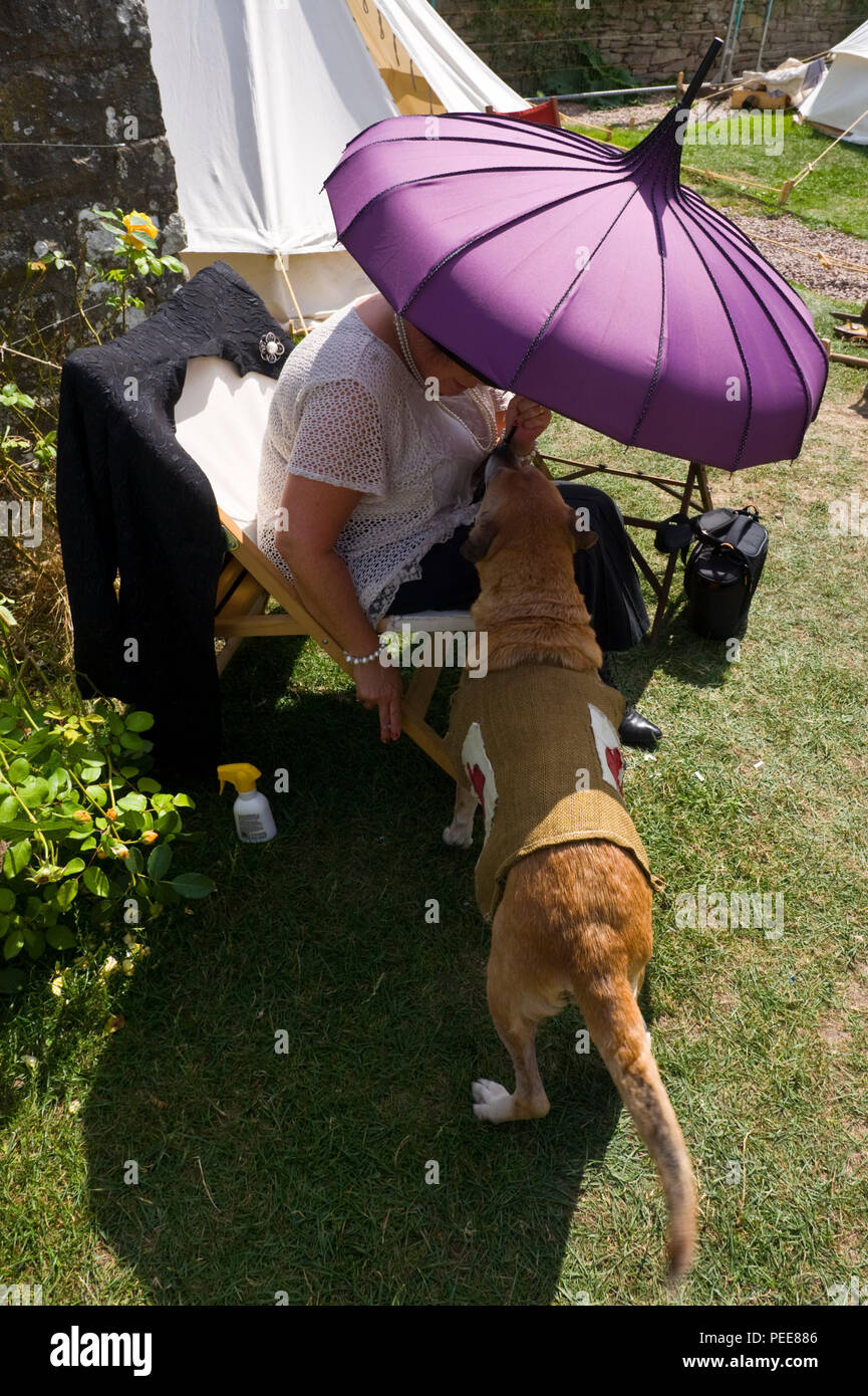 World War One commemorative event first aid dog trying to keep cool in the shade of a parasol at Hay-on-Wye Powys Wales UK - Stock Image