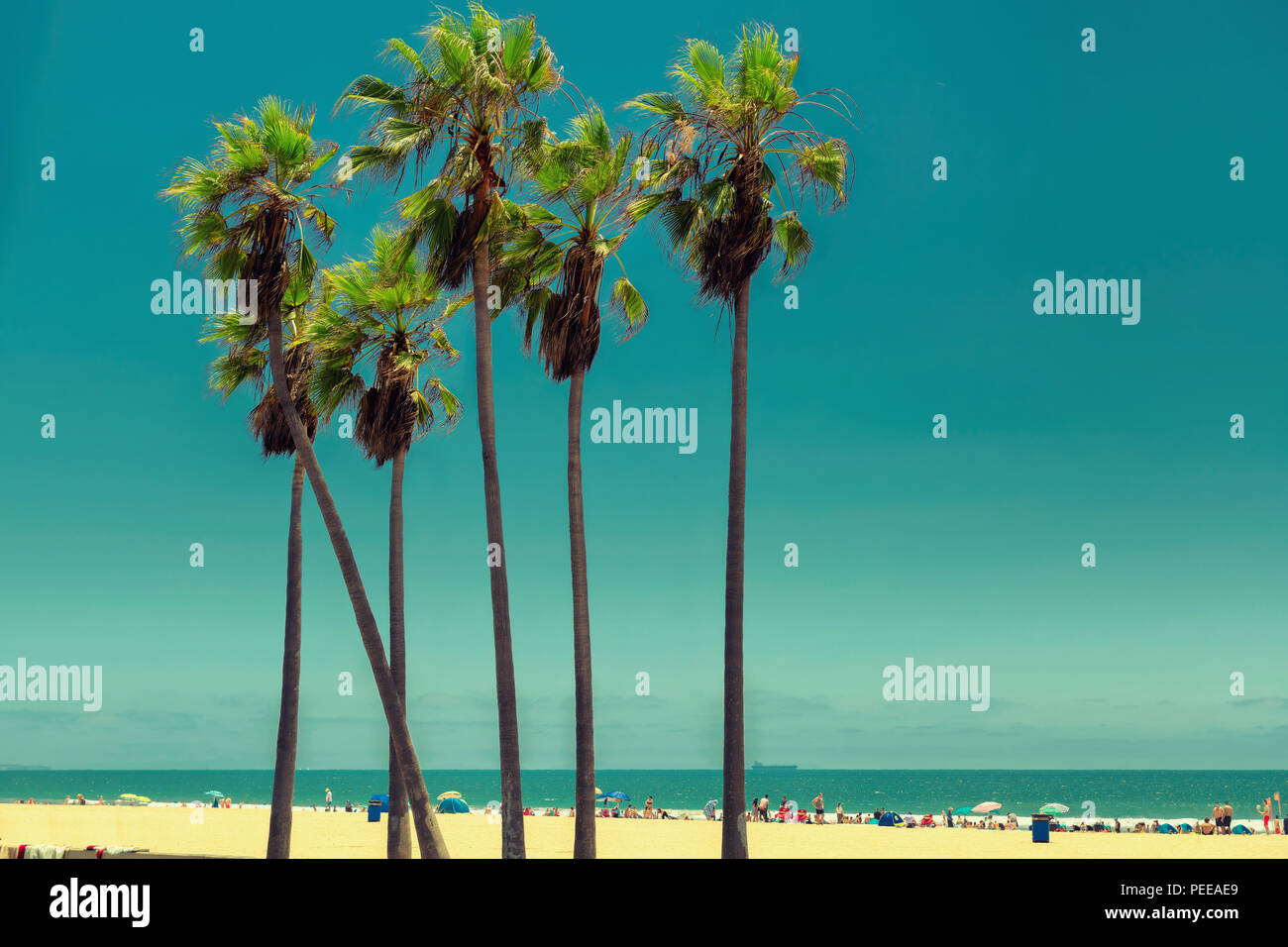 Palm trees in Venice Beach, Vintage processed. Stock Photo