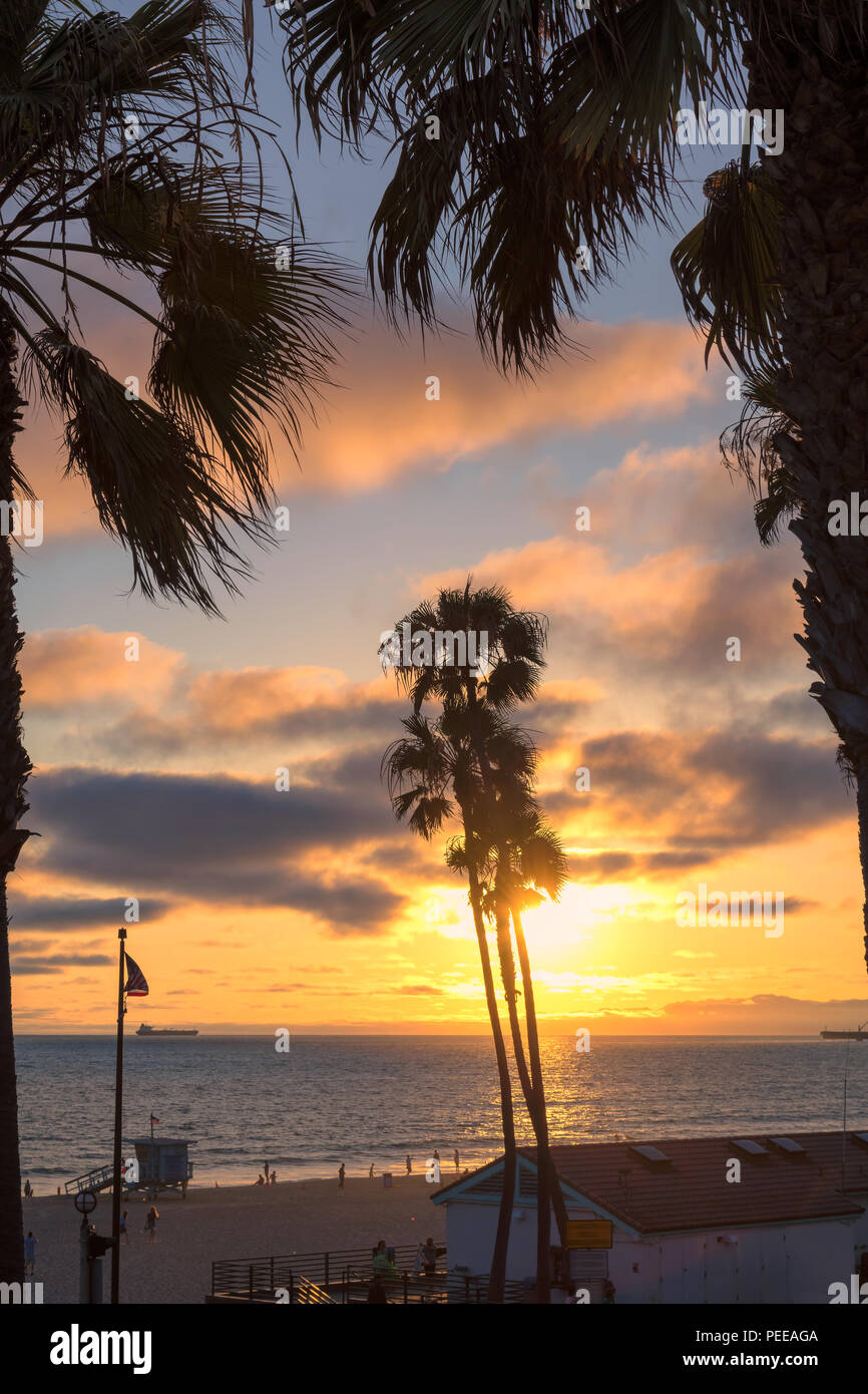 Palm trees and Pier on Manhattan Beach at sunset in California, Los Angeles, USA. - Stock Image