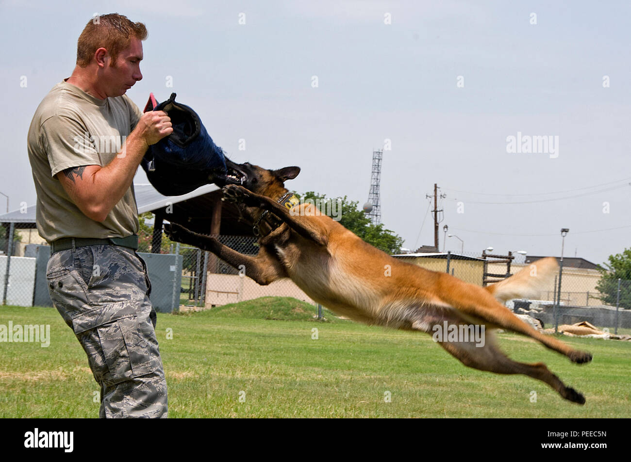 Tech. Sgt. Shawn Rankins and military working dog Eespn, 82nd Security Forces Squadron, demonstrate aggression training Aug. 4, 2015, at Sheppard Air Force Base, Texas. Aggression training keeps the working dogs proficient on protecting their handler and other personnel from dangerous suspects while conducting routine police work. (U.S. Air Force photo by Danny Webb/Released) - Stock Image