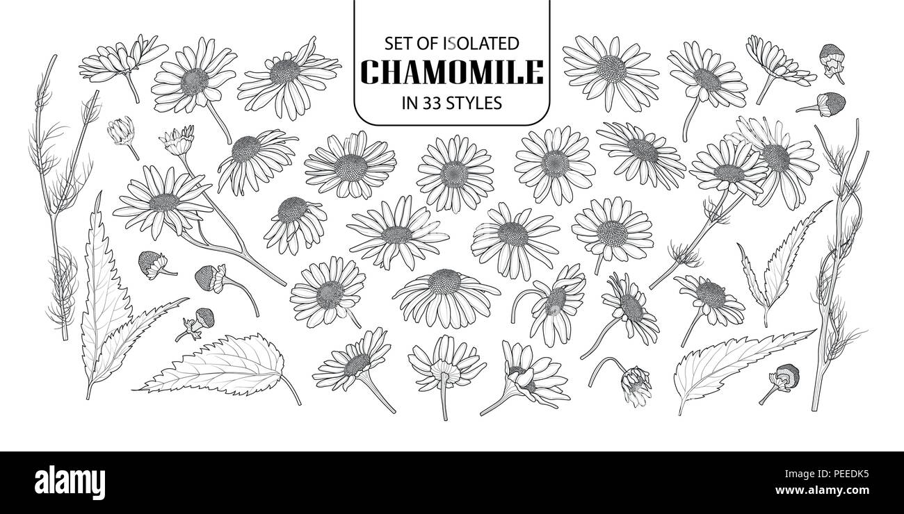 Set Of Isolated Chamomile In 33 Styles Cute Hand Drawn Flower