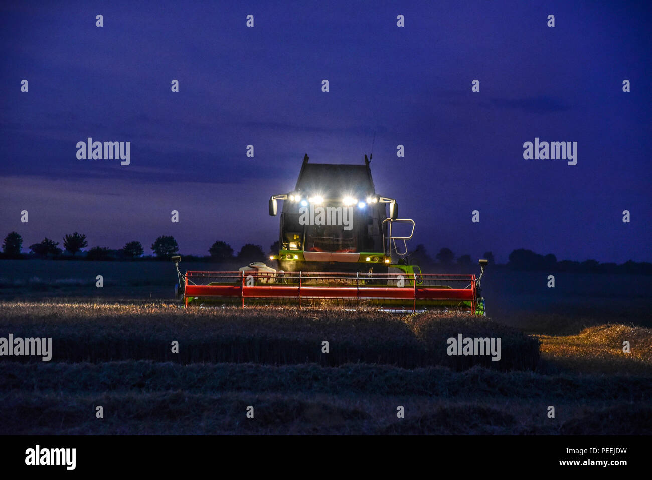 A combine harvester harvesting a field of corn as the sun goes down , headlights on. Stock Photo