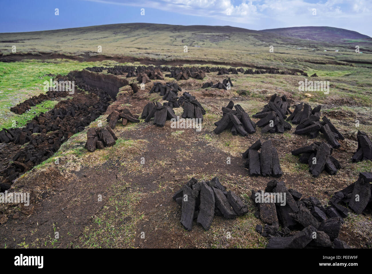 Peat extraction in bog / moorland showing piles of harvested peat drying to be used as traditional fuel, Shetland Islands, Scotland, UK - Stock Image