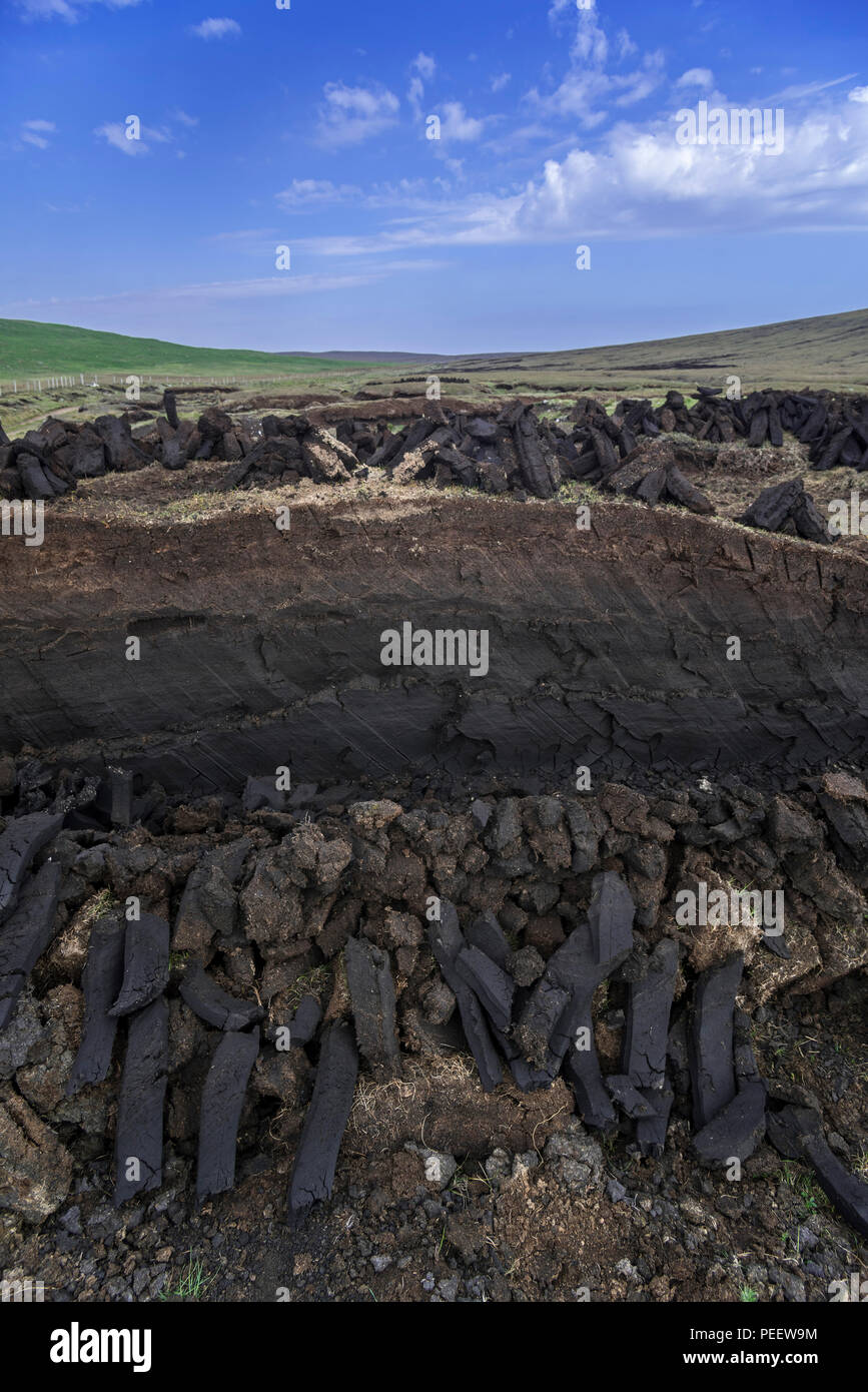 Cross section of moorland showing decayed vegetation / moss and piles of harvested peat drying to be used as traditional fuel, Shetland, Scotland, UK - Stock Image