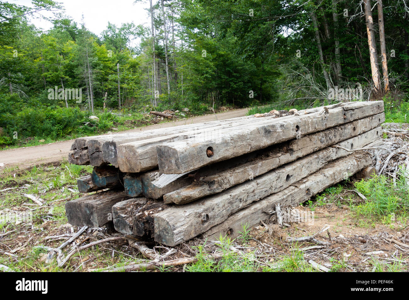 A pile of wooden timbers in the Adirondack forest used to build logging bridges in the winter. - Stock Image
