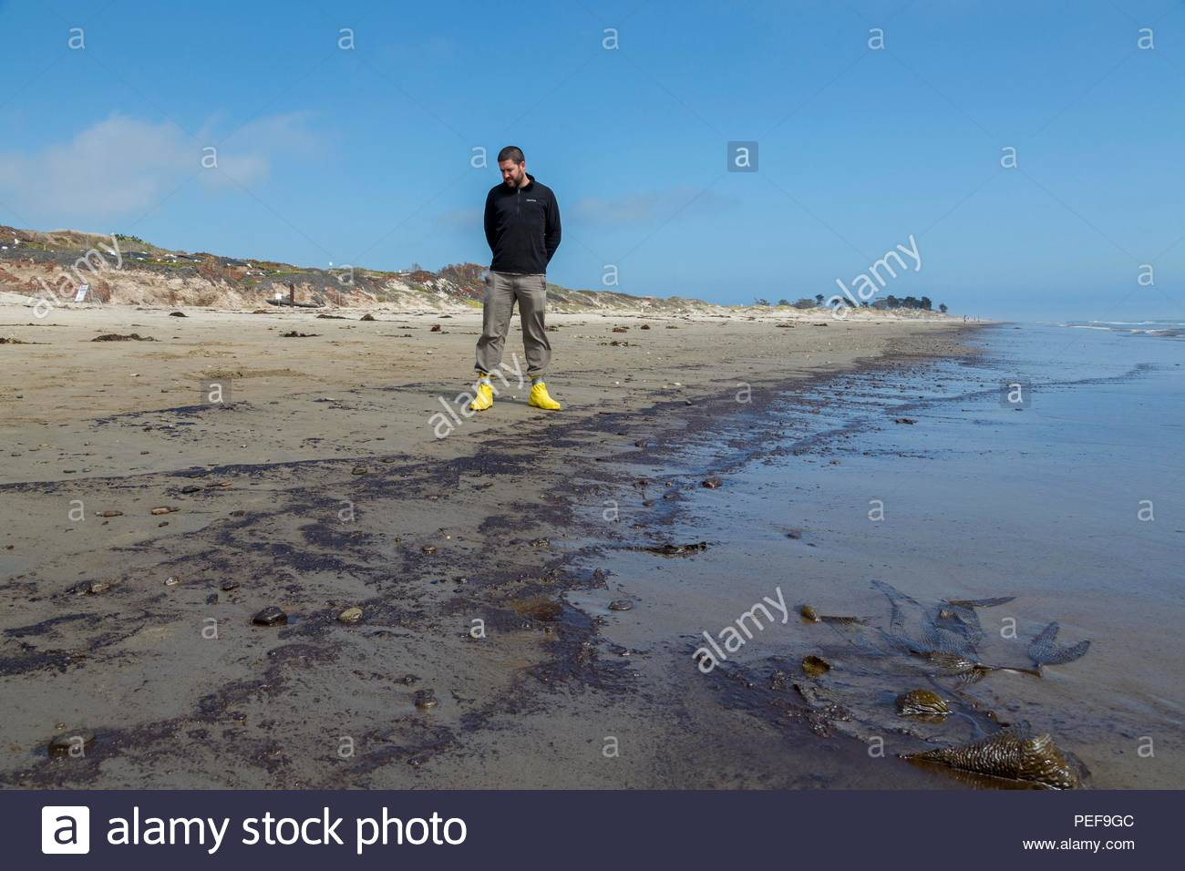 California Department of Fish & Wildlife, assessing oil washing ashore at Coal Point Reserve, one of the best remaining examples of a coastal-strand environment in Southern California, that protects a wide variety of coastal and estuarine habitats. - Stock Image