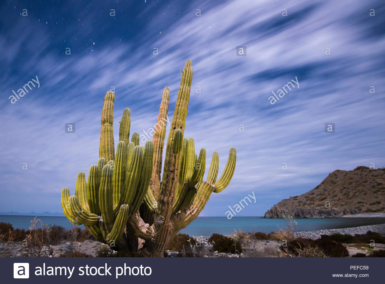 A cactus stands along the edge of the ocean. Stock Photo