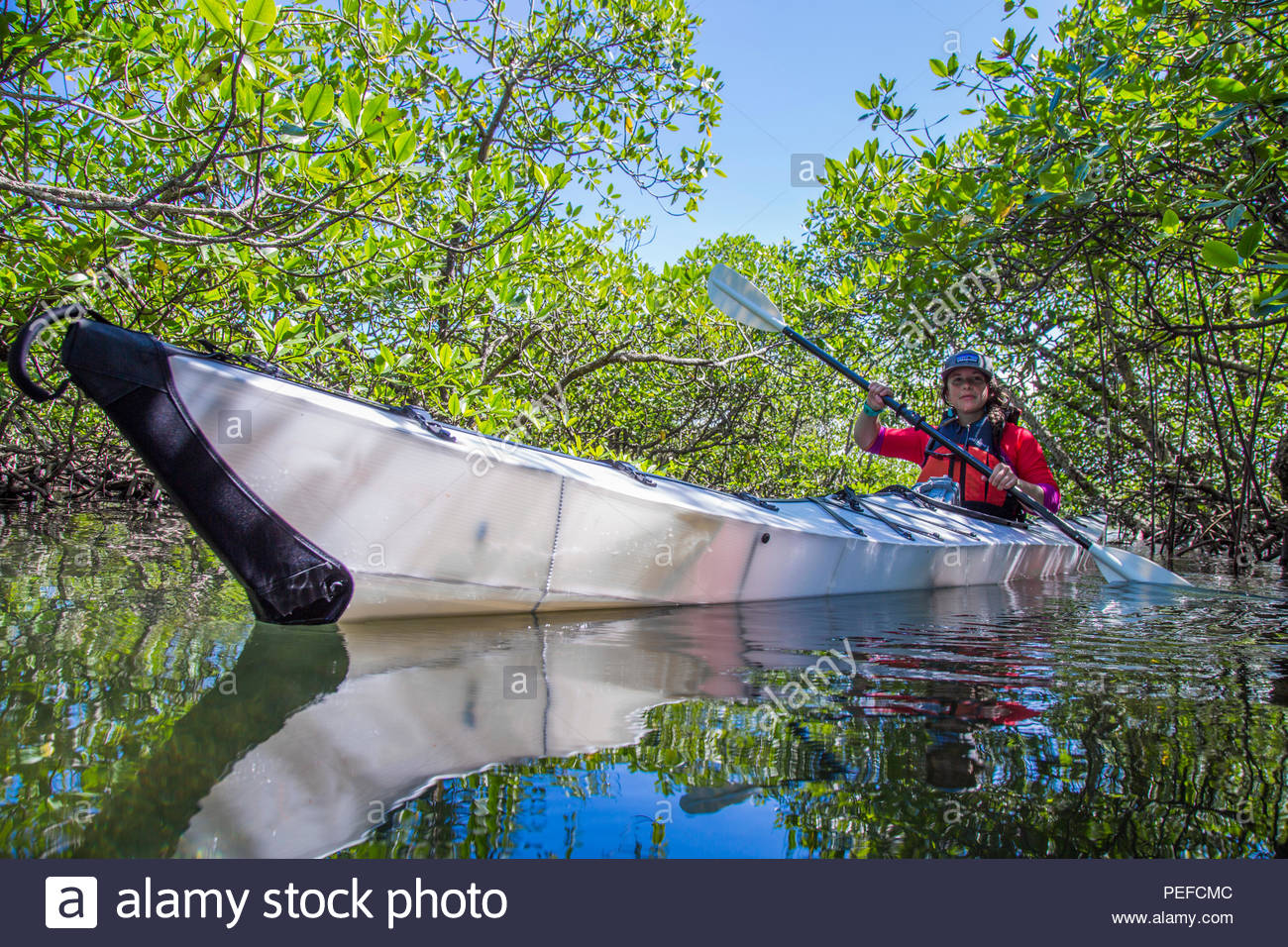 An expedition photographer paddles over sea grass and pencil coral in the lagoonal mangroves of Isla Bastimientos, Panama. Stock Photo