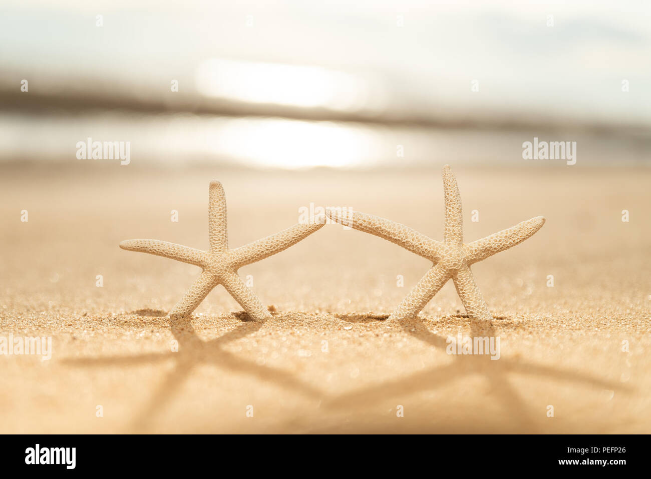 1931783429b7 Pair of starfish on Sandy beach background background during sunset for summer  holiday and vacation concept.