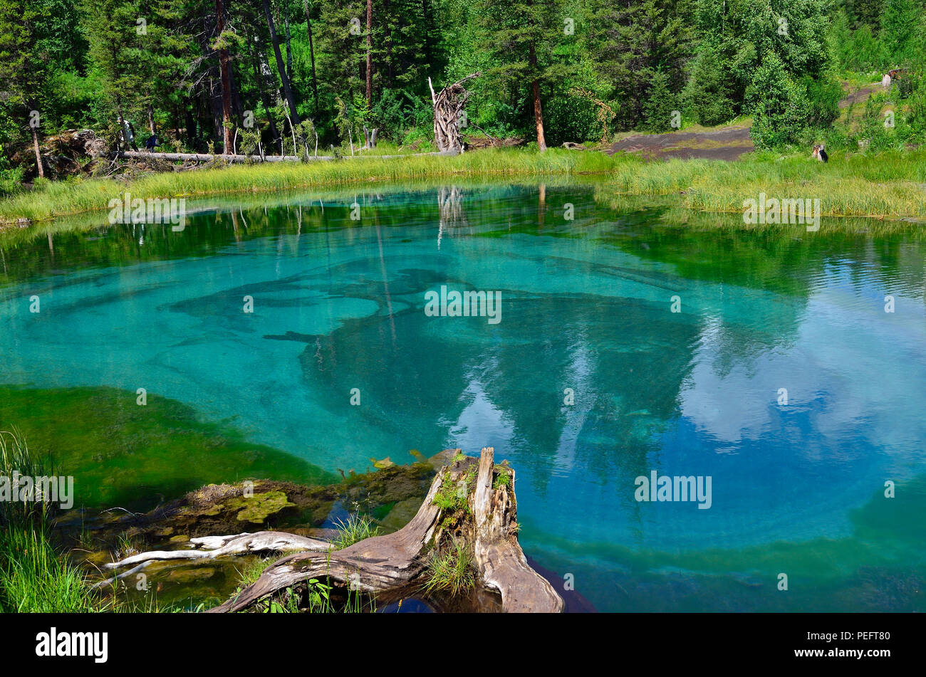 Amazing blue geyser lake in the mountains of Altai, Russia. Unique turquoise lake with crystal clear water and oval circular divorces, which all the t - Stock Image